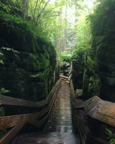West Virginia Has A Medieval Forest At Beartown St