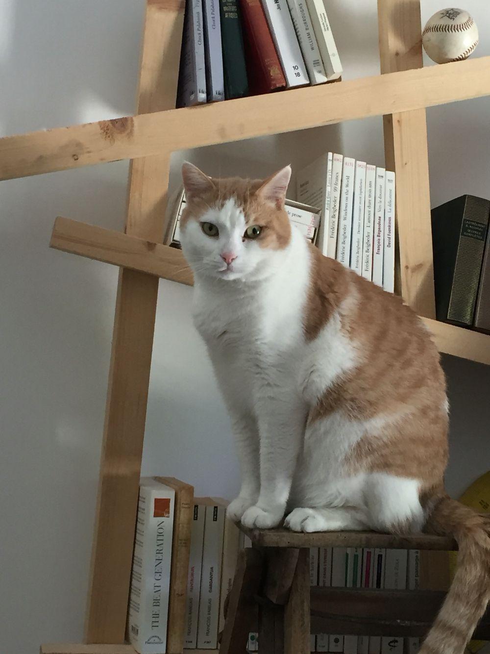 #chat #chaton #cat #kitten