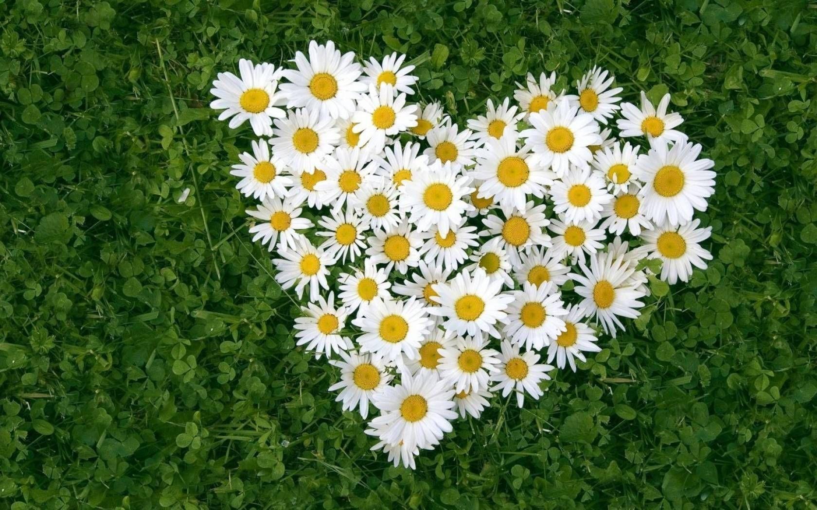 Imagenes De Fondo Flores Para Pantalla Hd 2: Fondos De Flores Hd Para Pantalla Hd 2 HD Wallpapers