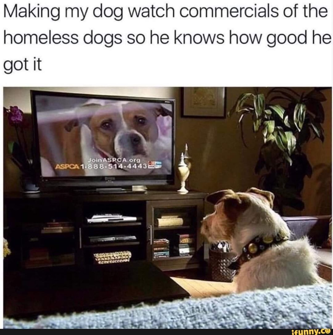 Making My Dog Watch Commercials Of The Homeless Dogs So He Knows How Good He Ifunny Homeless Dogs Funny Dog Pictures Dog Memes