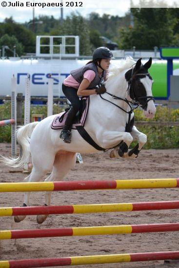 50% Paint Horse, 25% Warmblood, 12,5% Shagya Arabian, 12,5% Frederiksborg gelding Triippops Phantom