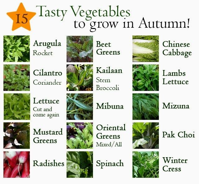 15 vegetables you can grow in autumn in the garden or pots list includes