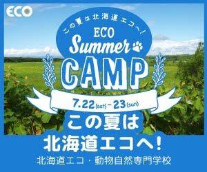 eco summer camp この夏は北海道エコへ 北海道エコ 動物自然専門学校
