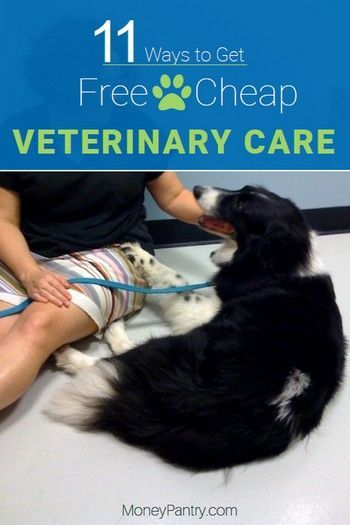 11 Ways to Get Free or Cheap Vet Care Near Me! Dog