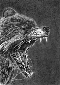 Charcoal and Pencil, Fox