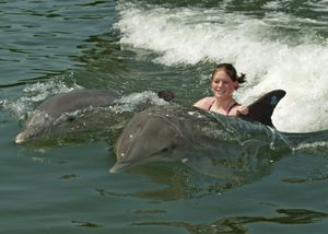 Swam With The Dolphins At The Dolphin Research Center In Marathon Key Fl That S Not Me In The Photo Dolphin Encounters Florida Dolphins Dolphins