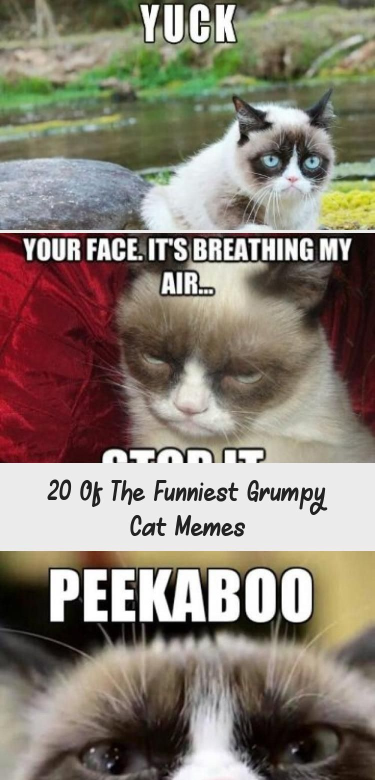20 Of The Funniest Grumpy Cat Memes In 2020