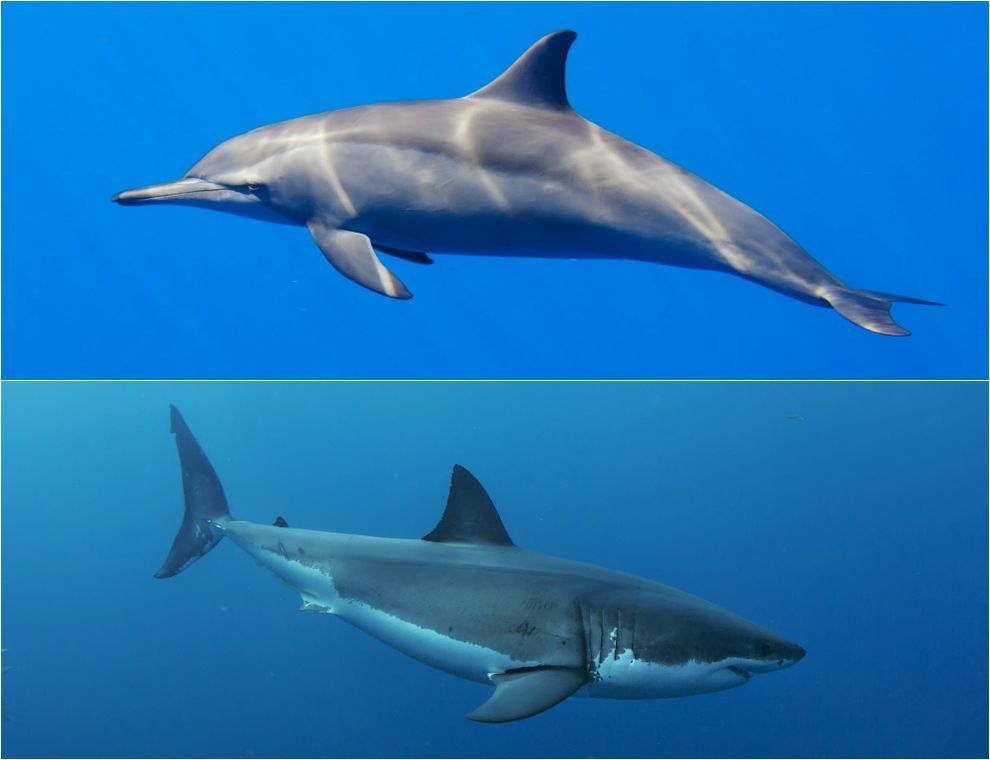 8 uncanny examples of convergent evolution