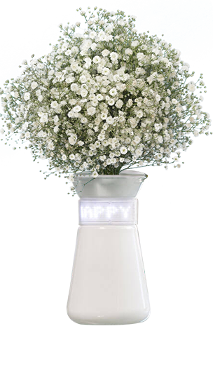 Babys Breath Flowers For Sale Express Delivery Flowers For Sale Babys Breath Babys Breath Flowers