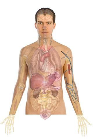 This Is The Android App Edition Of Human Anatomy Atlas The