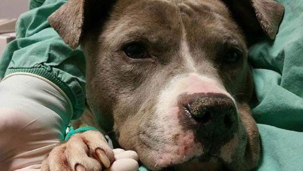 Rare Hermaphrodite Dog Turns Up At Detroit Animal Control
