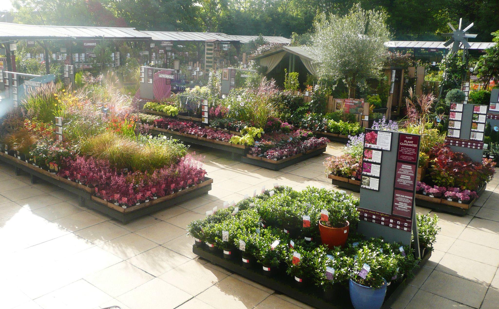 Rhododendrons Herbaceous Perennials Shrubs Squires Garden Centre Twickenham Garden Center Displays Garden Center Flower Nursery