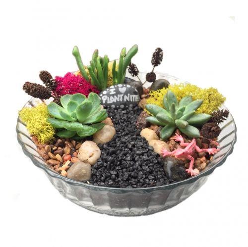 Plant Nite Orangecounty Succulent Garden In Vintage Glass Bowl Recess Room 7 31 2017 Terrarios Vasos De Plantas Terrario