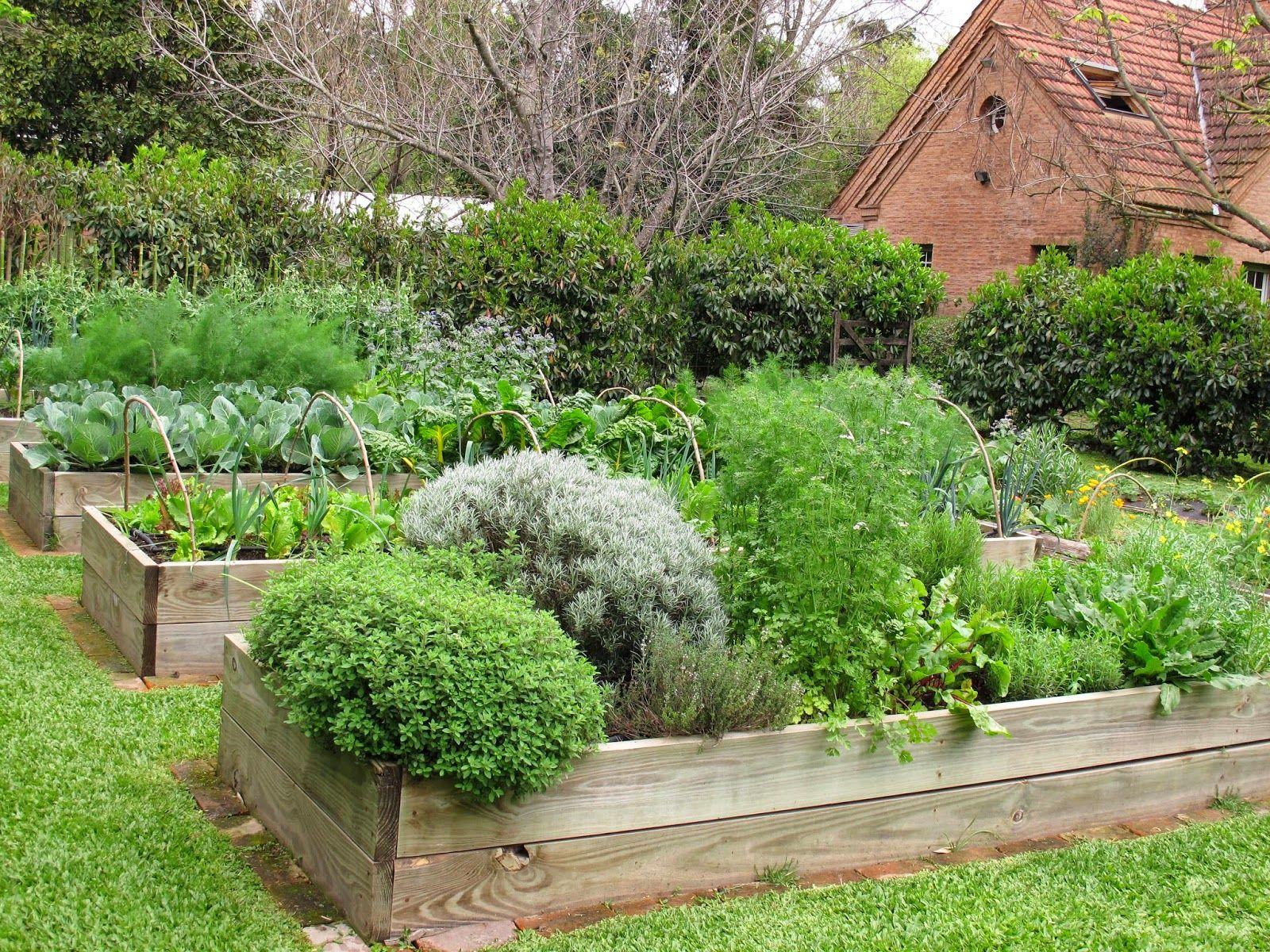 Ejemplo de huerta elevada cajones de pino de 1 10 por 4 metros y jardin - Pinos para jardin ...