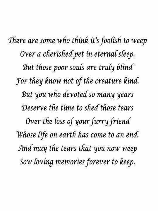 Pin by Carolina Rutherford on For our Angels   Pet loss ...
