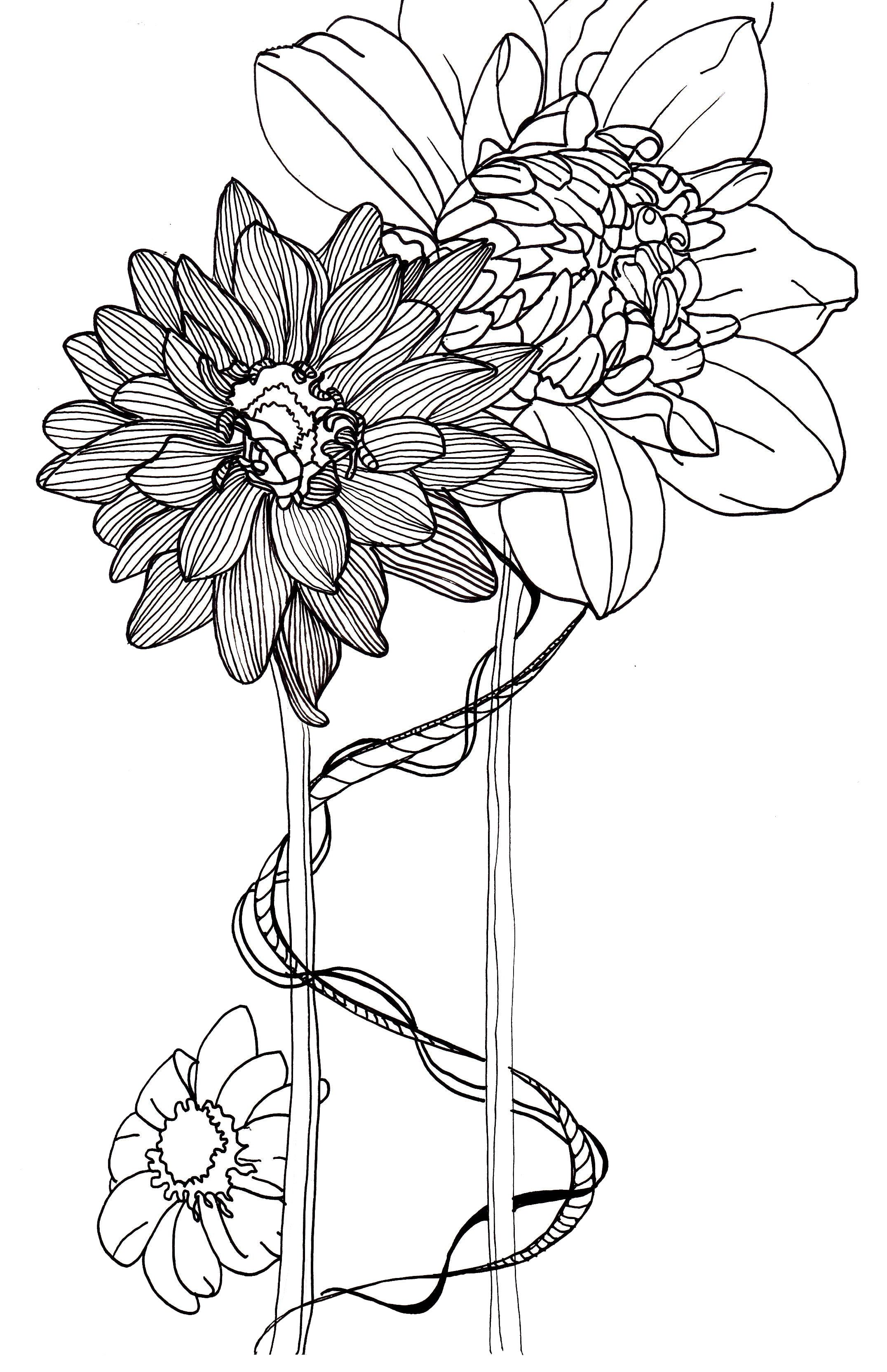 Flower In Line Drawing : Line drawing flowers dahlias drawings pinterest