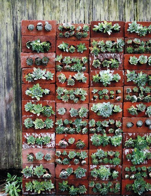 Succulents in bricks