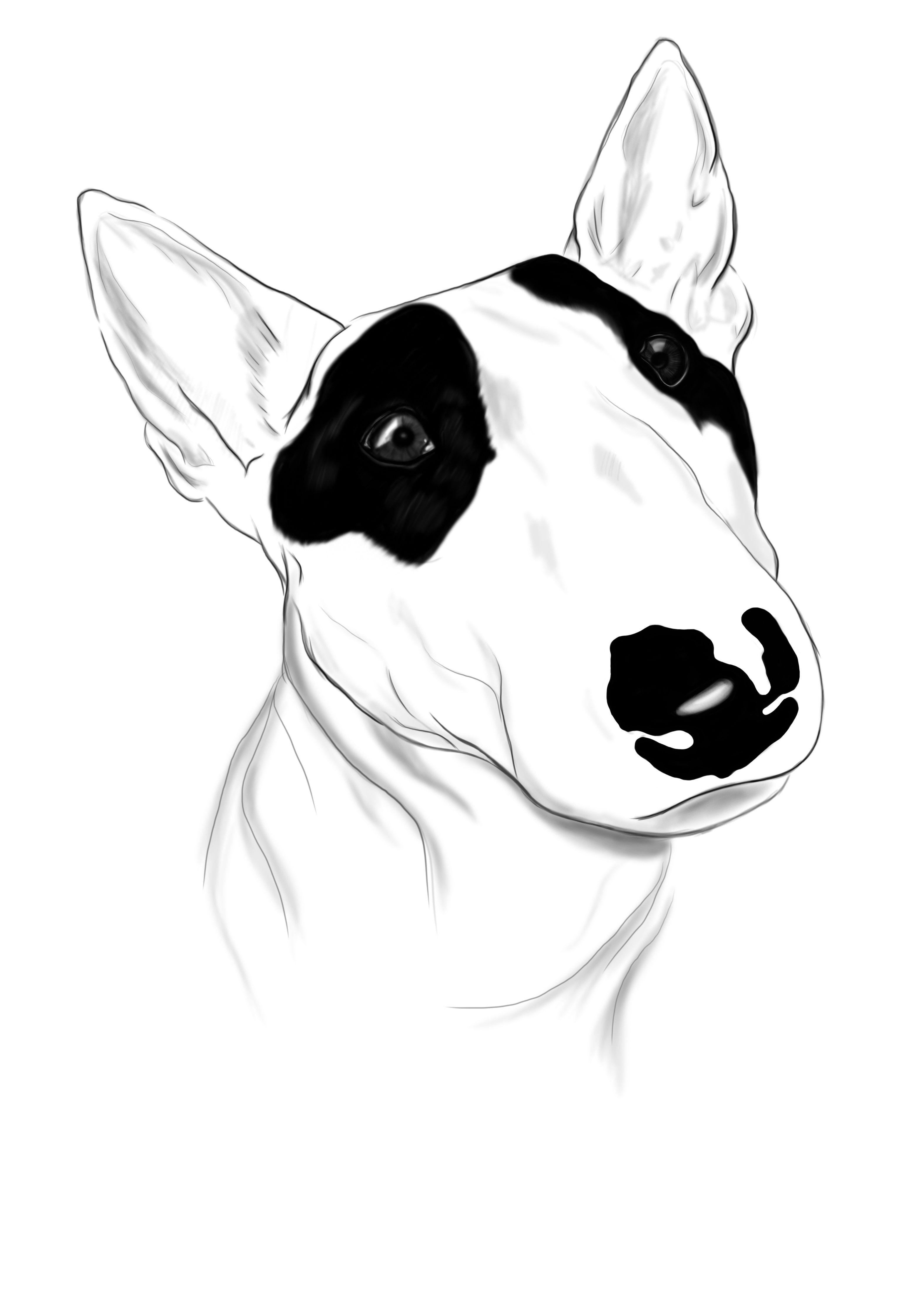 bull terrier by comik001