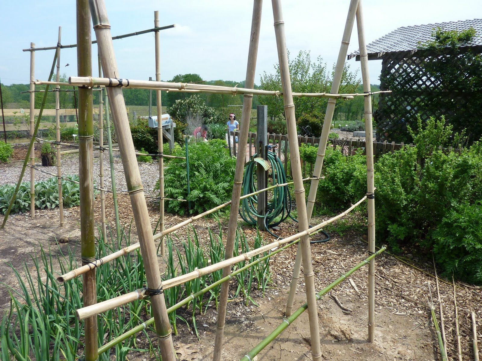 bamboo trellis ideas for peas beans raspberries and