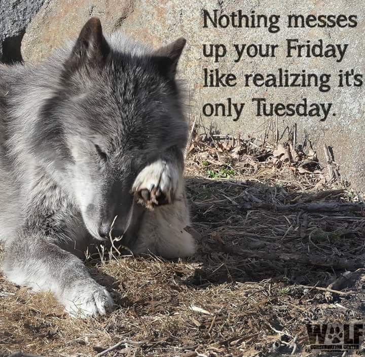Only Tuesday Dog Meme