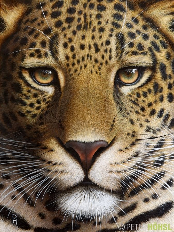 Portrait Of A Leopard 30cm X 40cm Oil On Stretched Canvas