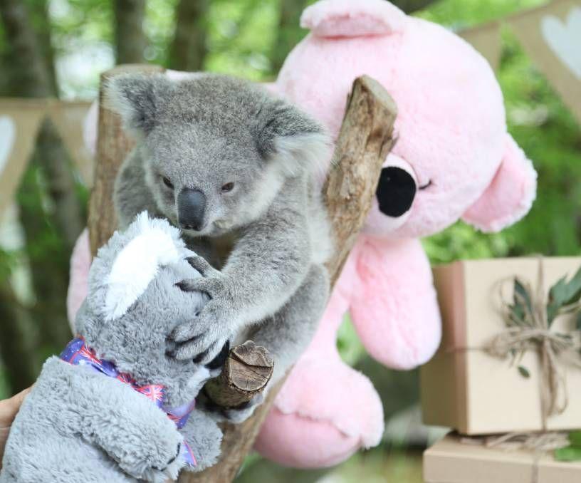 koala baby leksak