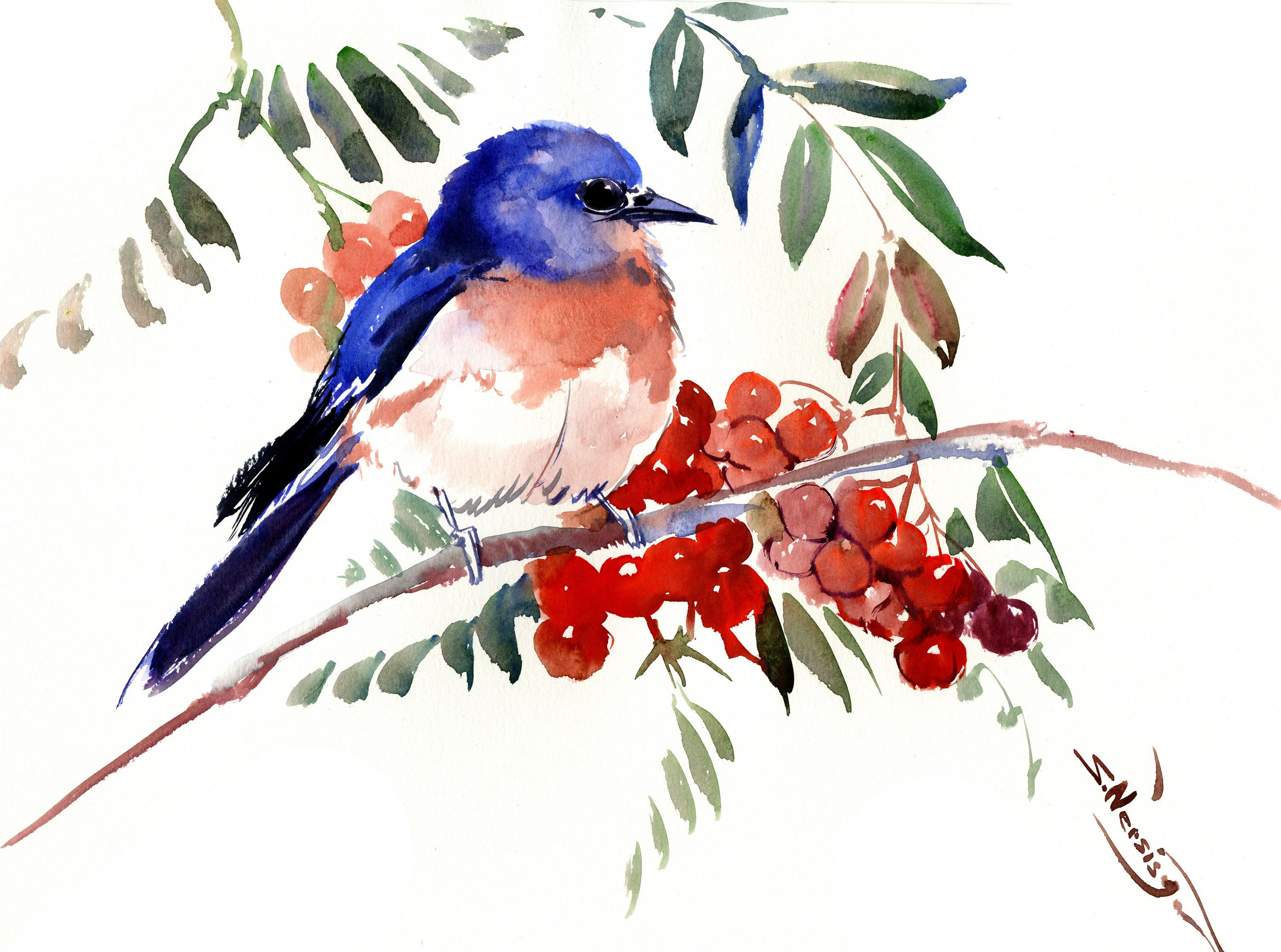 Bluebird And Berries Original Watercolor Painting By Originalonly