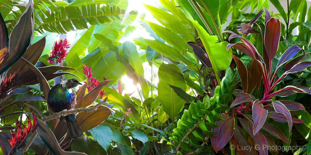 Contemplation Tropical Nz Tui Bird Art Canvas Wall Art Framed Print Bird Art Tropical Artwork Photo Wall Art