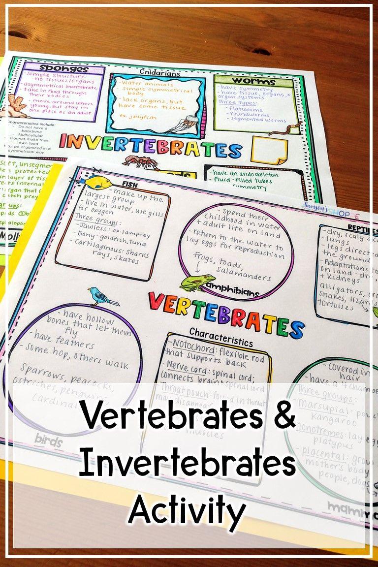 hight resolution of Vertebrates and Invertebrates Activity   Vertebrates and invertebrates