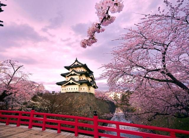 Best Places To See Japan S Cherry Blossoms Cherry Blossom Japan Japan Cherry Blossom