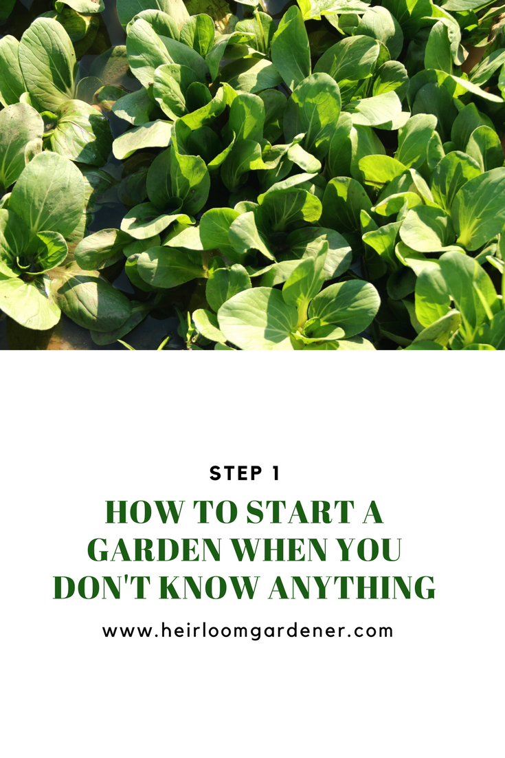 How To Start A Garden When You Donu0027t Know Anything