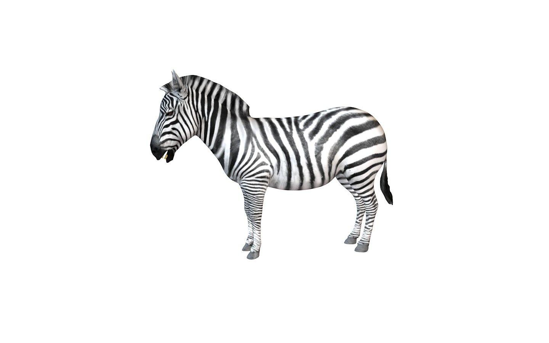 Zebra 3d Model 3d Model Zebra Model