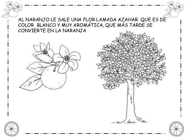 Pin de estefania pallares en LA NARANJA / LA TARONJA   Pinterest ...
