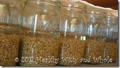 how to make sprouted grain flour