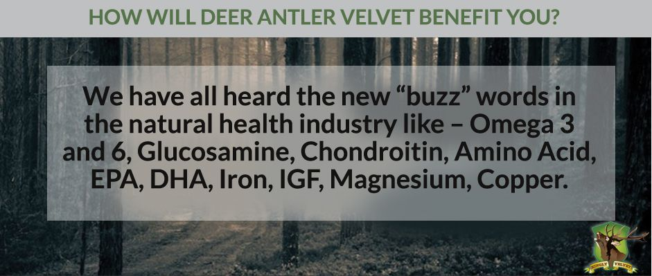 #DeerAntlerVelvet as a super supplement has been known to deliver numerous benefits for our body. Be 'in' and join the hottest buzz in the natural world industry. #KinglyVelvet http://bit.ly/kinglyvelvetbenefit
