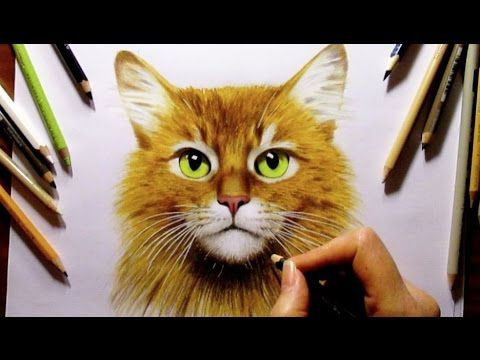 Colored Pencil Drawing Somali Ginger Cat Speed Draw Jasmina Susak How To Draw A Cat Cats Art Drawing Colored Pencil Drawing Color Pencil Drawing