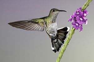 Seeing a hummingbird will completely make my day every time.