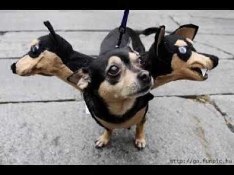 Very Funny Dog Costumes Pictures Gallery Http Www 7tv Net Very