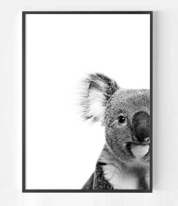 Koala bear australian animal art print koala print koala bear gifts koala art black and white print animal photography koala wall art