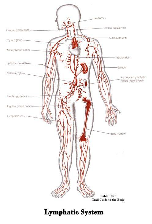Manual Lymphatic Drainage - MLD | anatomy | Pinterest | Lymphatic system