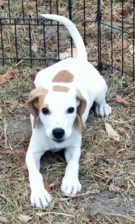 Adopt Jess pending on Pets, Animal help, Poor dog