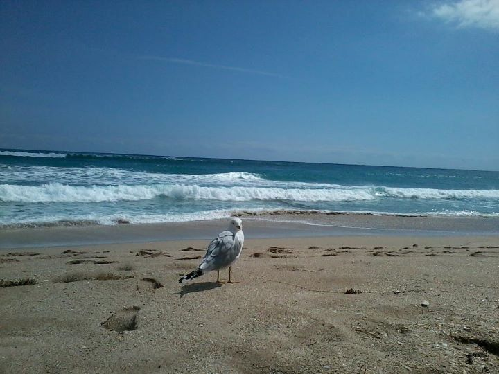 Palm beach florida photo by me florida attractions