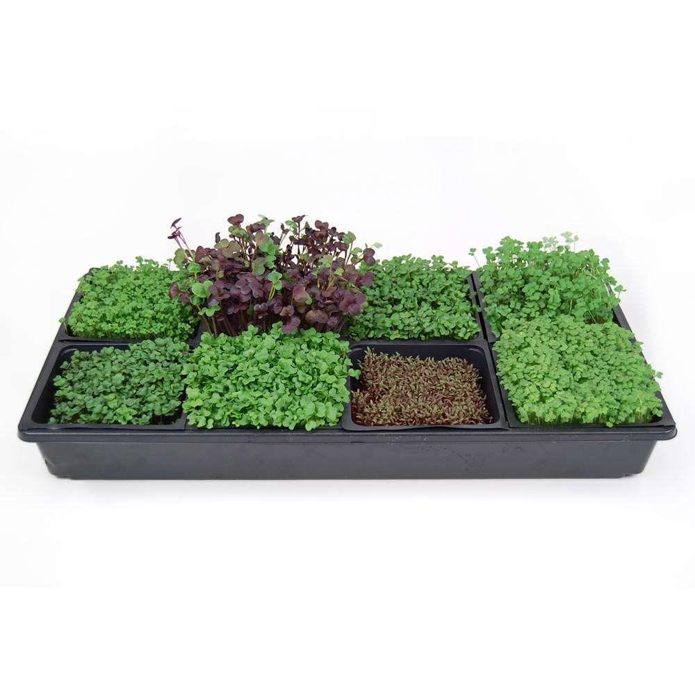 Patio & Garden Growing Things Hydroponic gardening