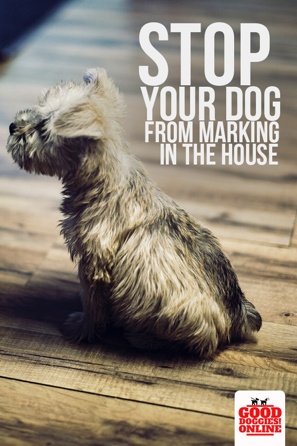 How To Stop Your Dog From Marking In The House Good Doggies Online Dog Training Dogs Dog Advice