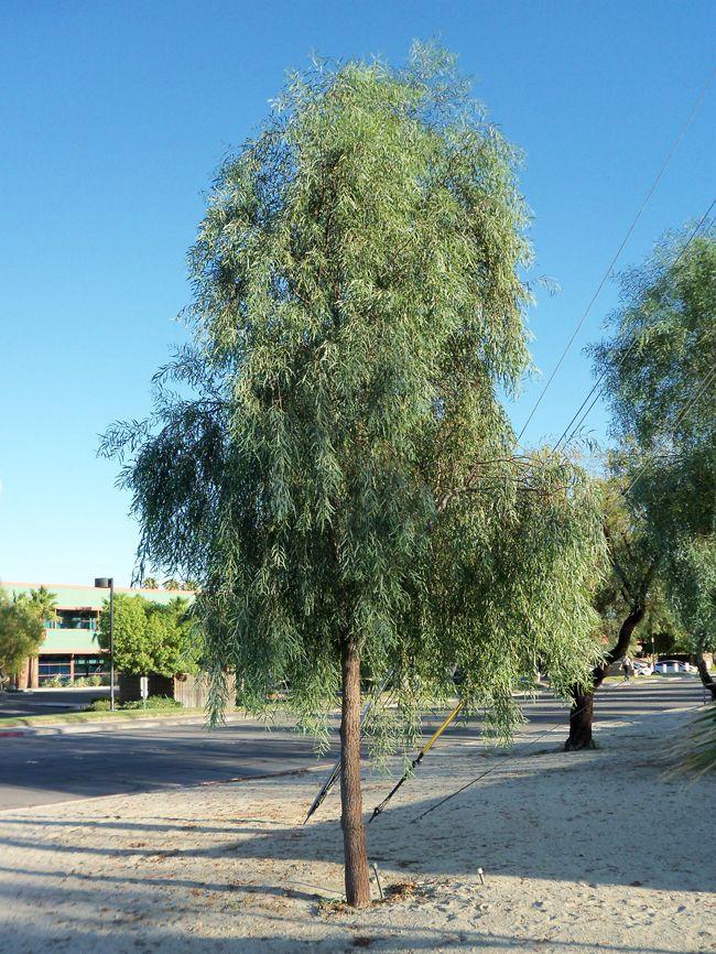 Las Vegas Desert Landscaping