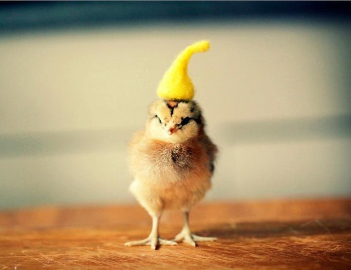 Pin On Tiny Animals With Teeny Hats