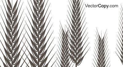 Free Vector image of Ear of rye or wheat #226 includes graphic collections of ear of rye, spike and wheat. You can download this image in EPS, JPG and PDF format.