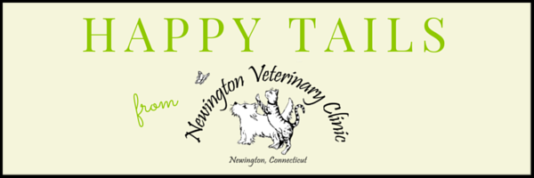 The April Happy Tails newsletter.