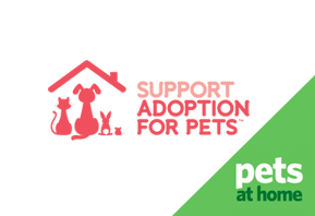 Support Adoption For Pets Digital Creative Portfolio Selesti S