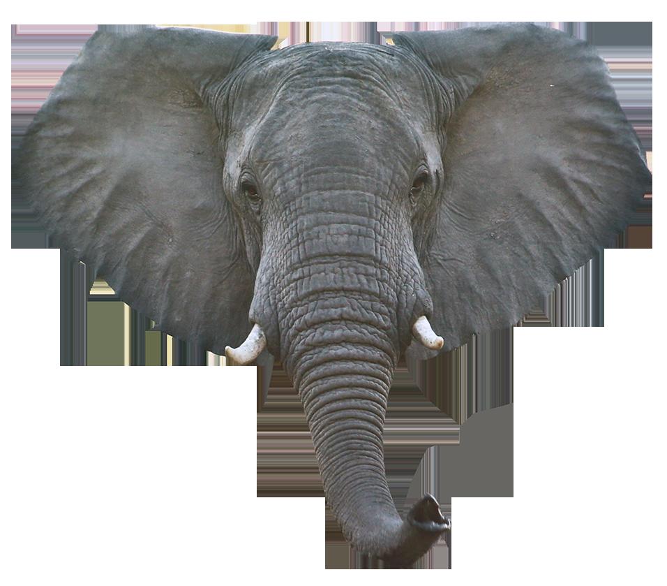 Elephant Head Png Images Elephant Head Elephant Face Elephant Drawing